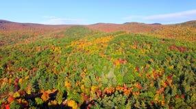 树的五颜六色的领域在一座山一边的在秋天fo期间 库存照片