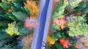 树的五颜六色的领域在一座山一边的在秋天fo期间 库存图片