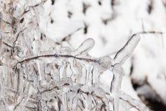 从树的冰本质上 免版税图库摄影