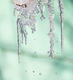 从树的冰本质上 免版税库存照片