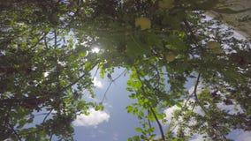 树的分支乱丢与果子发光与太阳的光芒反对天空 股票视频