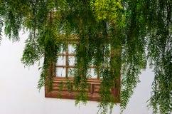 树的分支包括的窗口 免版税库存照片