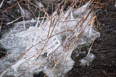 树的分支在冬天河结冰 库存照片