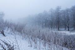 树的分支的弗罗斯特在冬天公园 免版税库存图片