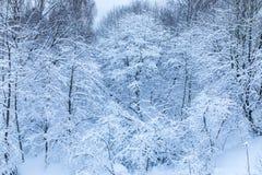树的分支的白色美好的冬天背景在森林里或在雪下的公园 免版税库存照片