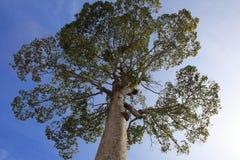 树的分支 免版税库存图片