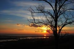 树的剪影和在日落的岸 库存照片