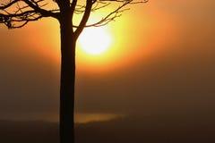 树的剪影在日出期间的 库存照片