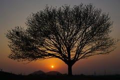 树的剪影 免版税库存照片