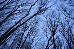 树的剪影 库存图片