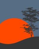 树的剪影 库存照片