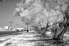 树的单色红外图象排行了街道 库存图片