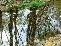 树的反射和天空在秋天筑成池塘 免版税库存图片