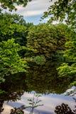 树的反射在一个湖的Haagse猜错的,森林在海牙 免版税图库摄影