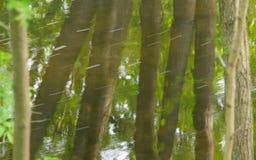 树的反射在明尼哈哈小河的水的一个晴朗的夏日在米尼亚波尼斯,明尼苏达 库存图片