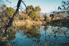 树的反射在水中在s的一无云的天 库存图片