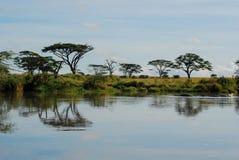 树的反射在水中 免版税库存照片