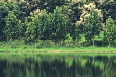 树的反射在水的在有绿色自然和山的一个池塘 免版税库存照片