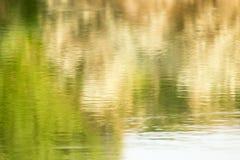 树的反射在水的 免版税库存照片