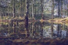 树的反射在沼泽 库存图片