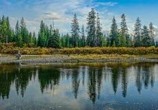 树的反射在湖的有在蓝天下的 库存照片