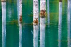 树的反射在湖绿色背景的  免版税库存照片