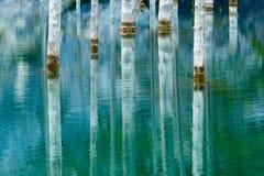 树的反射在湖绿色背景的  库存照片