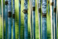 树的反射在湖绿色背景的  图库摄影