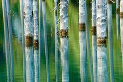 树的反射在湖绿色背景的  免版税图库摄影