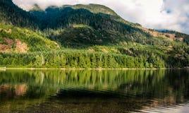 树的反射在湖 库存图片