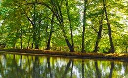 树的反射在湖 免版税库存图片