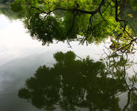 树的反射在镇静湖 库存图片