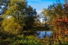 树的反射在水中在秋天 免版税图库摄影