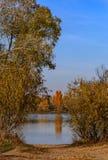 树的反射在水中在秋天 库存图片