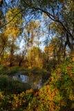 树的反射在水中在秋天 免版税库存图片