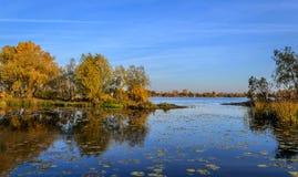 树的反射在水中在秋天 图库摄影