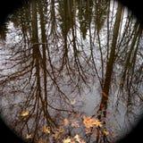 树的反射在水中在秋天 免版税库存照片