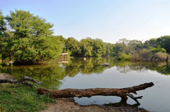 树的反射在水中 免版税图库摄影
