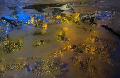 树的反射在水坑的 免版税库存照片