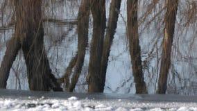 树的反射没有叶子的在水中 影视素材