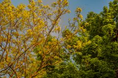树的叶子是为愈合国家 库存照片