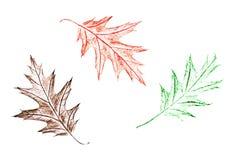 树的叶子画与在白色背景的蜡笔 皇族释放例证
