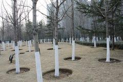 树的叶子的森林 免版税库存图片