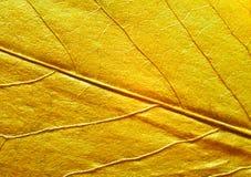 树的叶子 库存照片