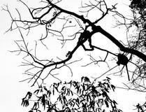 树的吉本斯 免版税库存照片