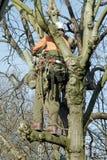树的后面伐木工人 免版税库存图片