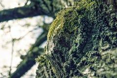 树的吠声特写镜头  免版税库存图片