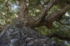 树的吠声特写镜头  库存照片