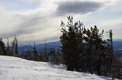 树的图象在山顶部的在深雪背景的冬天在Sheregesh西伯利亚镇  免版税库存照片