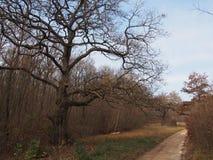 树的大根 图库摄影